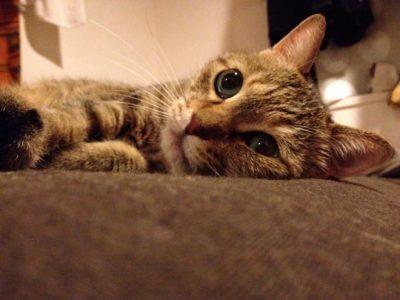 愛猫です。いつも一緒に寝ています。