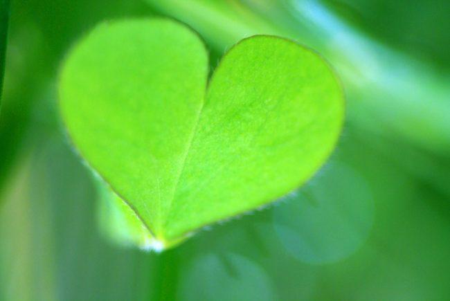 ハートの色【グリーン】で深呼吸を