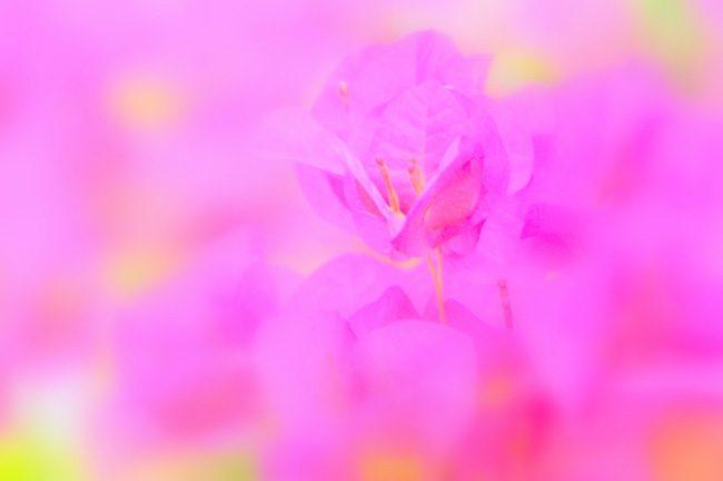 ピンクの色が持つ優しさは誰のため・・・