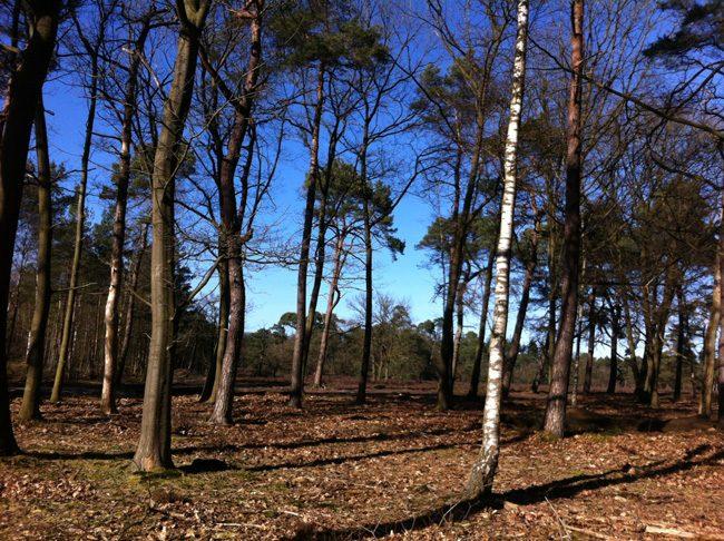 Nunspeetの森を歩いて森林浴と日光浴