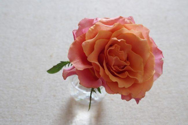 【編集長日記】それでも花は咲いていく