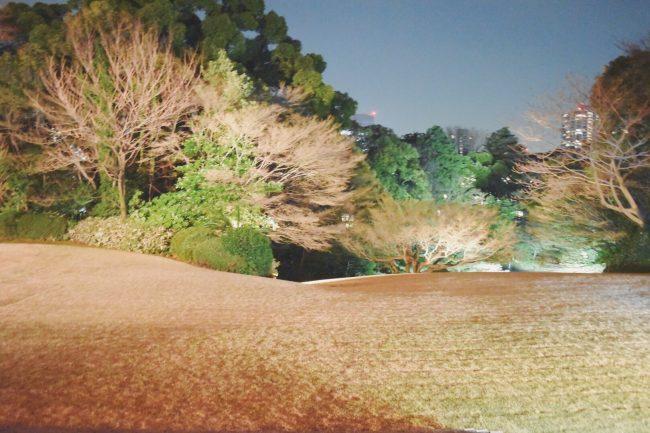 大使公邸の広い中庭は、とても素晴らしい日本庭園になっています