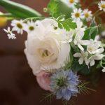 可憐な春のお花