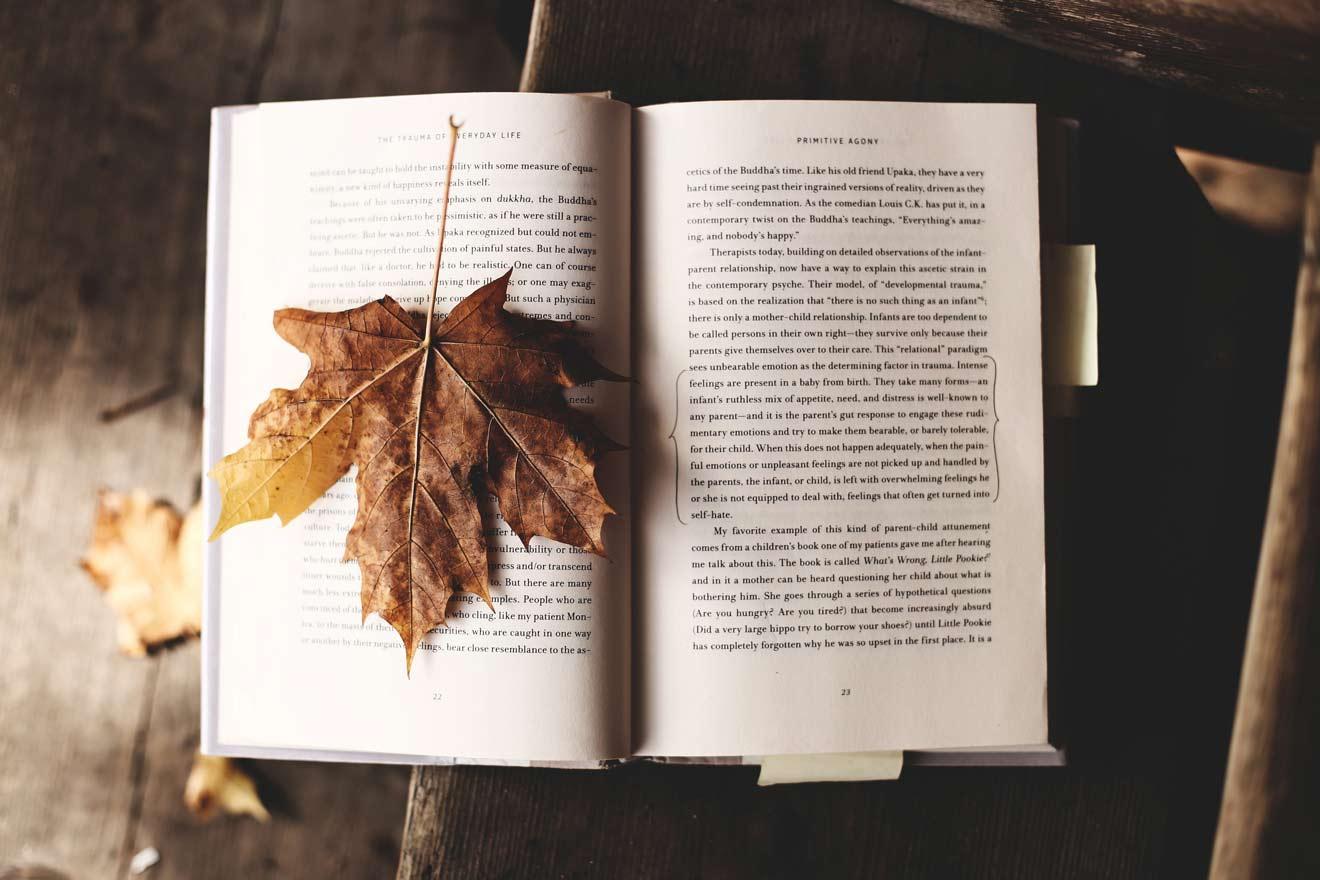 本と楓の葉