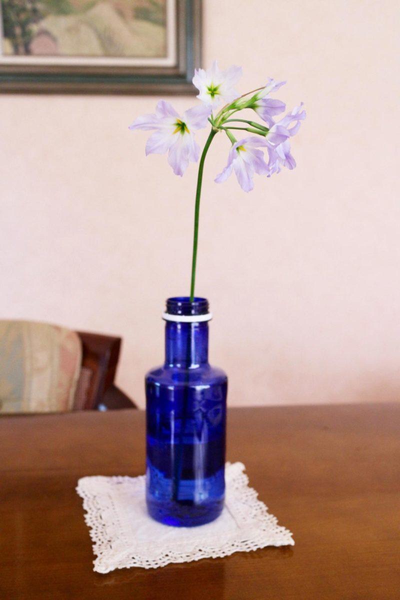 リューココリーネと青いペットボトル