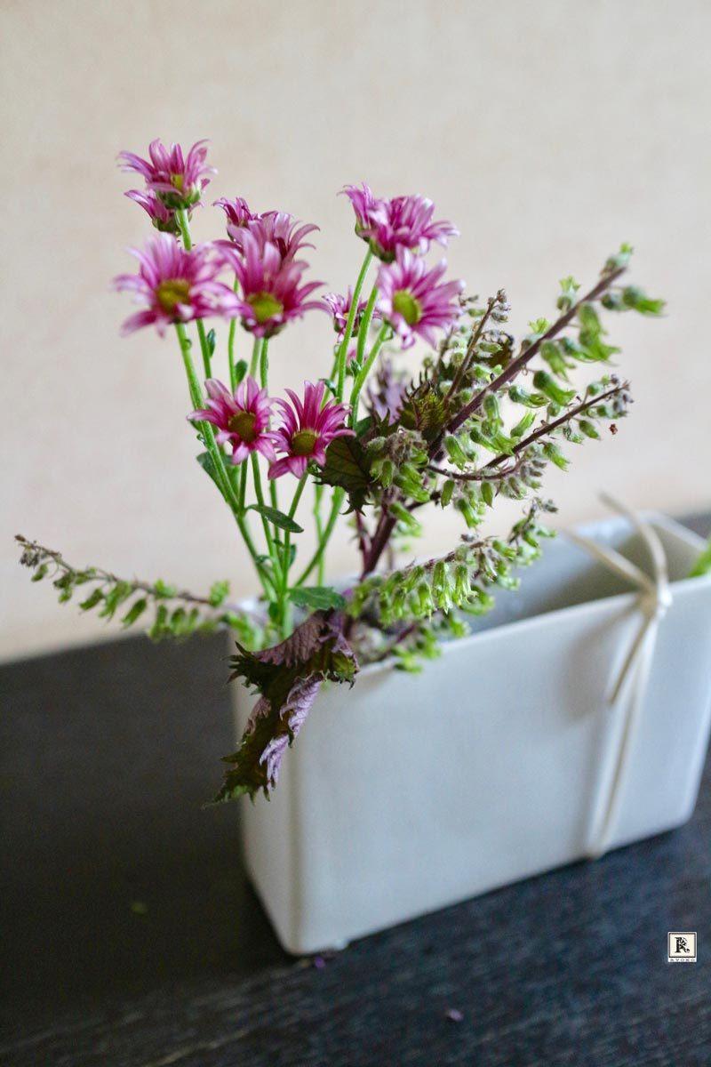 シソとミニ菊