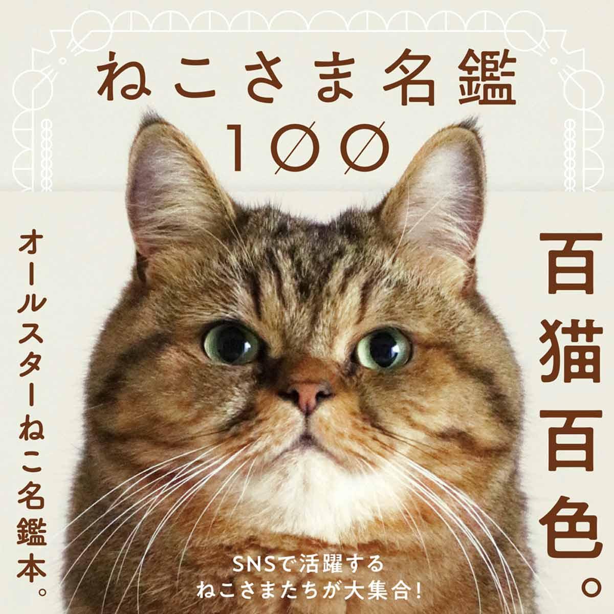 ねこさま名鑑100