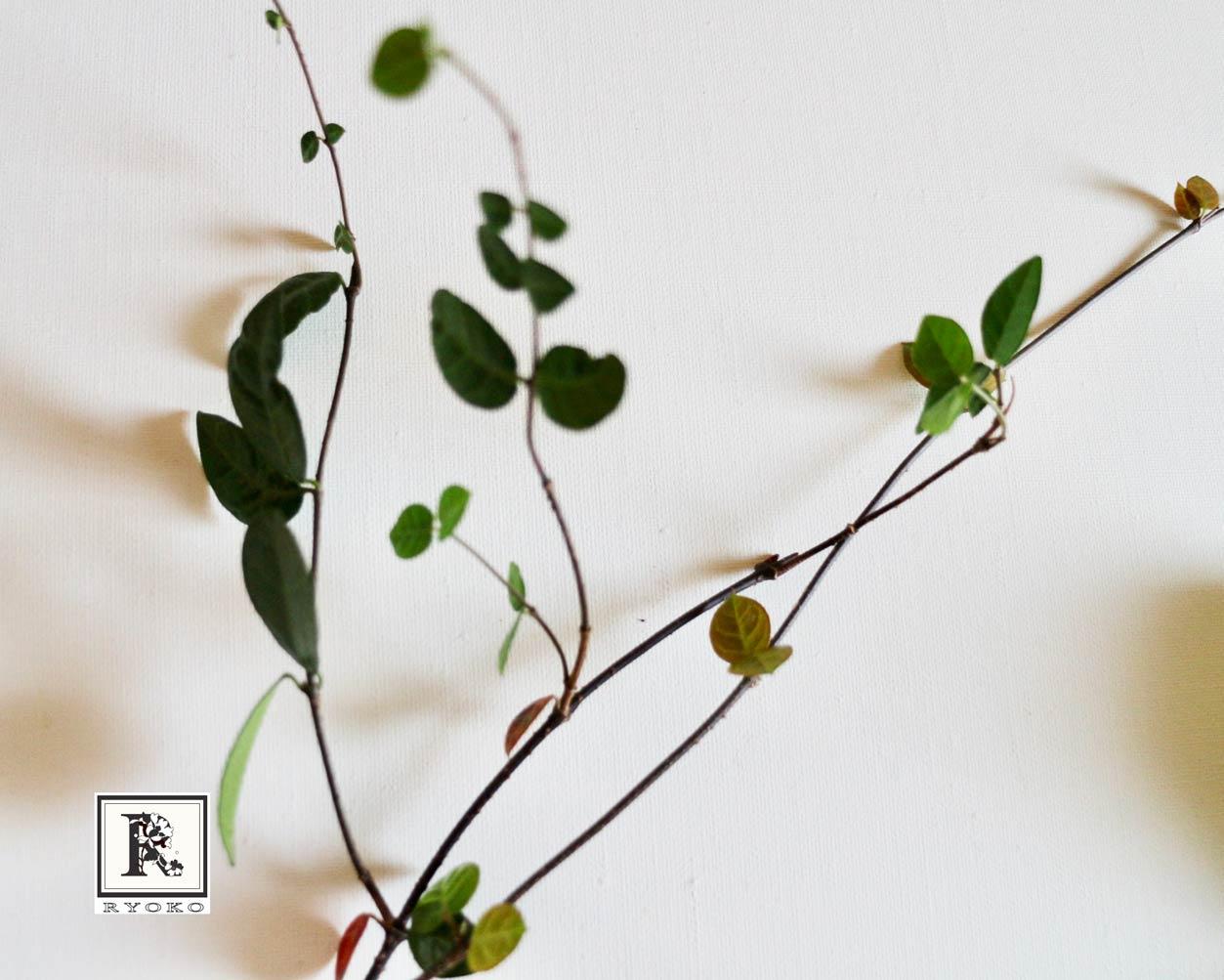 蔓性のグリーン