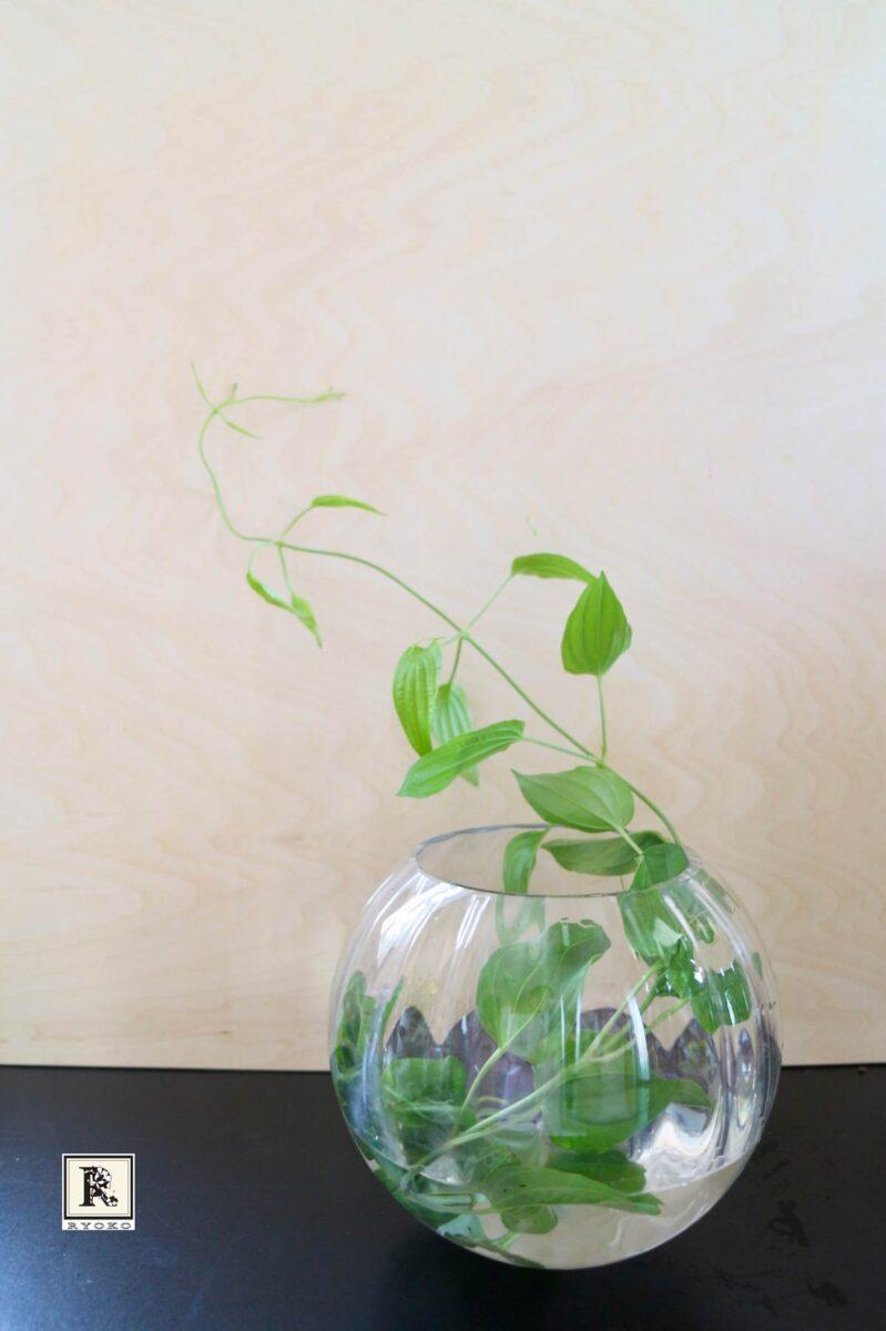 花瓶に利久草を入れる